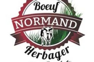 boeuf_normand_herbager - Copy