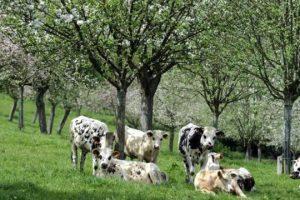 les-producteurs-de-fruits-et-legumes-ne-veulent-pas-decotaxe